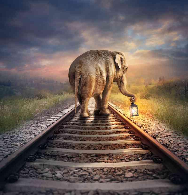 Petição: Proteja os elefantes de serem atingidos por trens na Índia