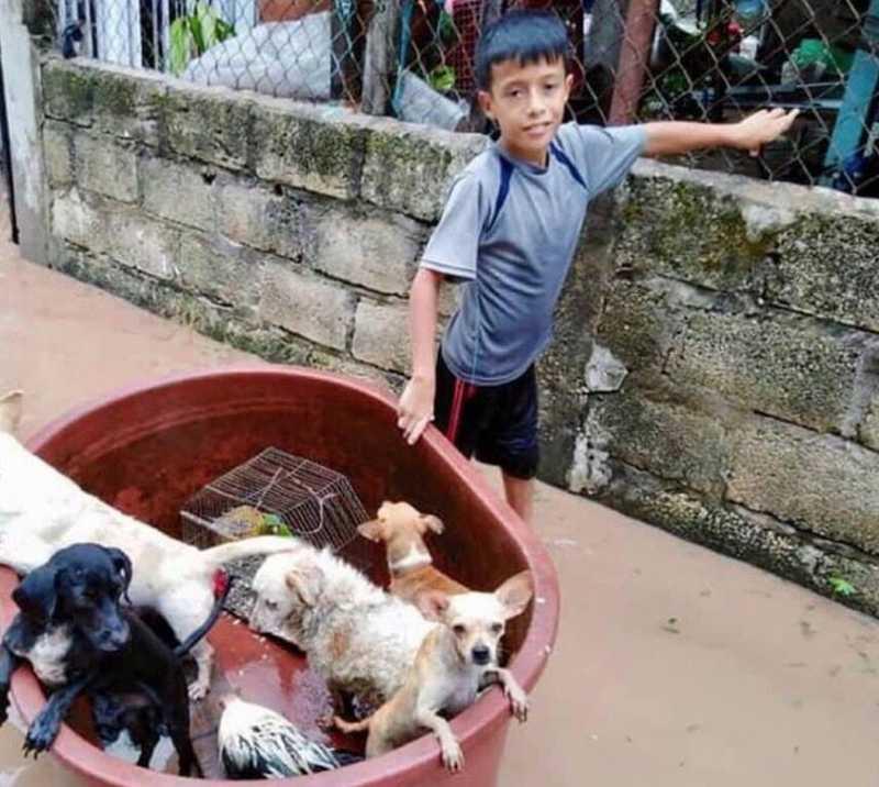 Menino de 10 anos usou balde de plástico para salvar animais de uma inundação