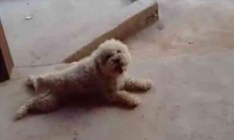 Pet shop é denunciado após cão morrer e loja tentar dar outro em troca