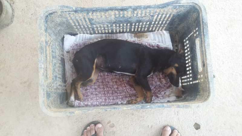 Ainda viva, cachorra foi colocada dentro de uma caixa para ser levada ao pet shop. — Foto: Arquivo pessoal