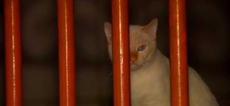 Os gatos não foram levados pela Vigilância. O G1 procurou a Prefeitura, mas a assessoria não soube informar o motivo da decisão — Foto: Reprodução/TV Integração