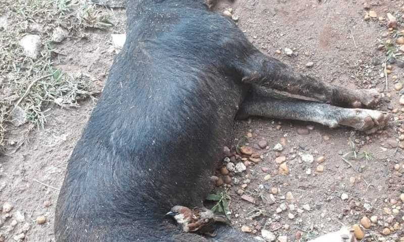 Além de quatro cachorros, um pássaro morreu — Foto: Polícia Militar de Meio Ambiente/Divulgação