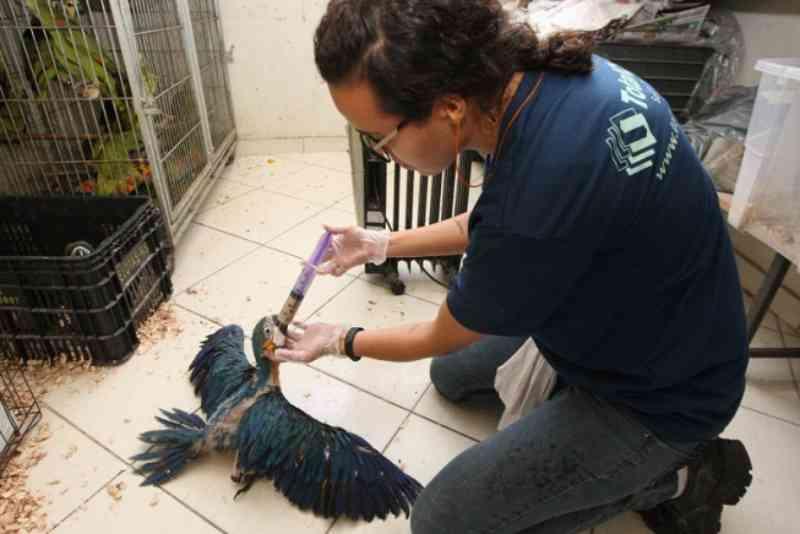 Resgate de animais silvestres bate recorde em Minas Gerais