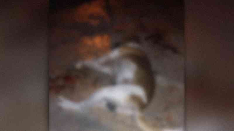 Cadela é morta com tiro e tutora acusa vizinho no Jardim Canguru, em Campo Grande, MS