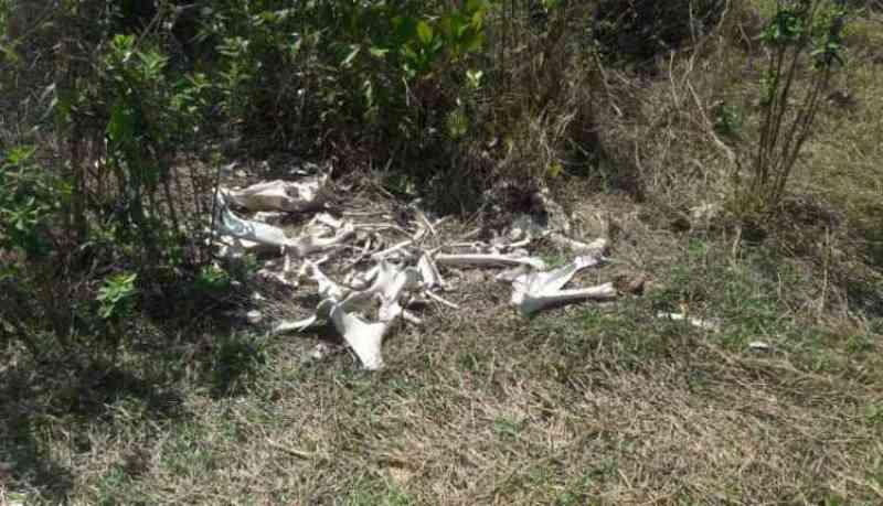 Fazendeiro é multado em R$ 23 mil por deixar bois morrerem de fome
