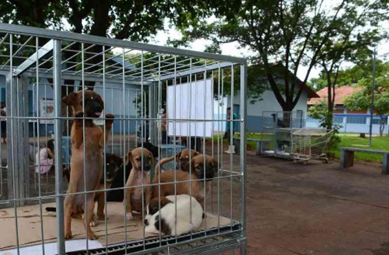 Prefeito de Campo Grande (MS) quer instalar UPA para cães e gatos em 2020