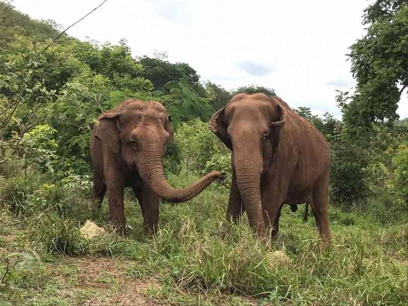 Nova moradora, Ramba interage com outras elefantas do Santuário em Chapada dos Guimarães (MT) e surpreende cuidadores