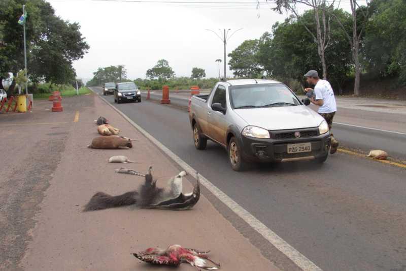 Animais empalhados foram colocados às margens da BR-070, em Barra do Garças (MT), para alertar sobre atropelamento dos bichos nas rodovias mato-grossenses — Foto: Polícia Rodoviária Federal de Mato Grosso/Assessoria