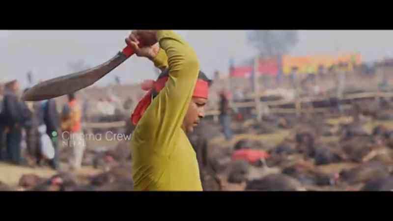 O maior sacrifício em massa de animais está prestes a começar no Nepal