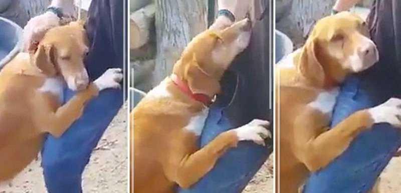 Jornalista vai até um canil para escrever um artigo e acaba adotando cão que não saia do seu lado