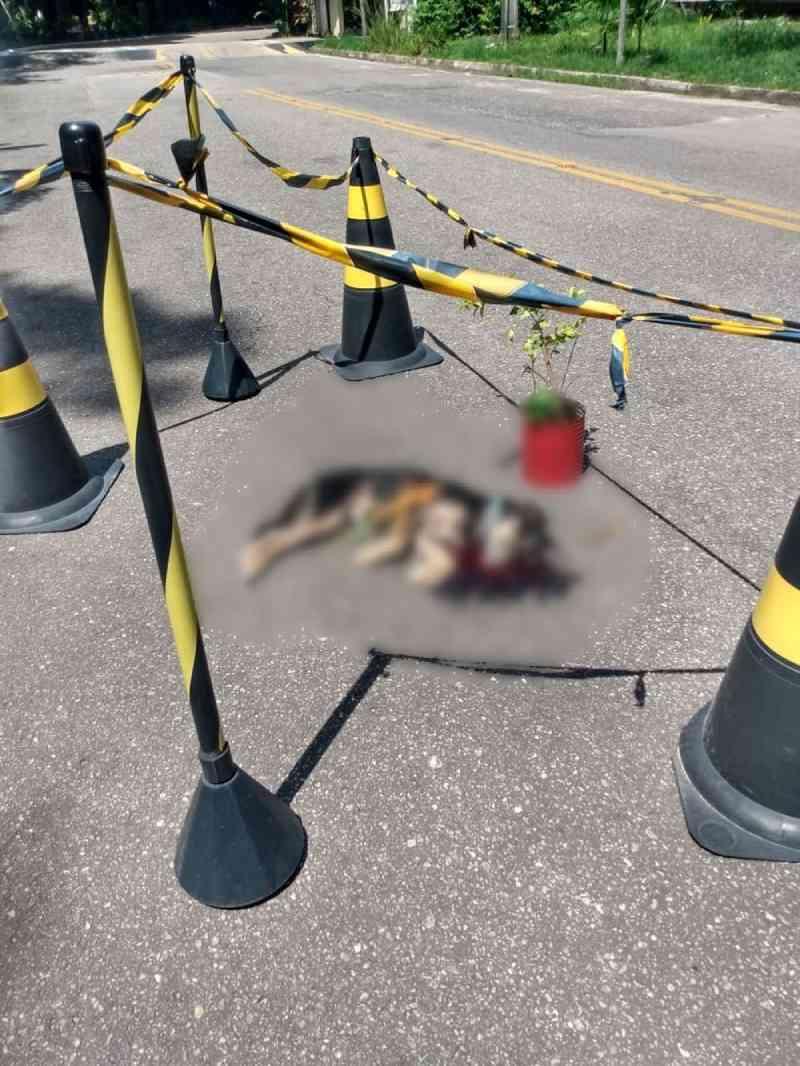Carro em alta velocidade atropela e mata cachorro acolhido por projeto da UFPA
