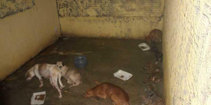 Animais morrem à mingua em 'Abrigo do Terror' da prefeitura de Curionópolis, PA