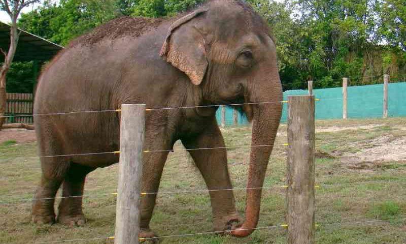 Símbolo da Bica, elefanta Lady inicia sua jornada para nova vida em santuário