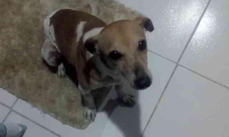 Após tratamento, cachorro que levou facada no abdômen em PE procura lar