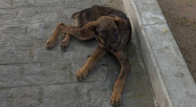 Flanelinha é levado para a delegacia após maus-tratos contra cadela no Agreste de PE