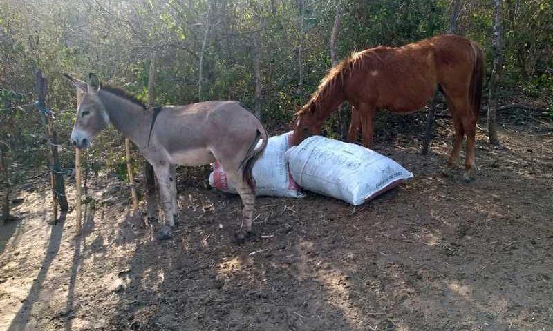Jumentos e cavalos eram abatidos para consumo humano em estabelecimento clandestino em Limoeiro, no Agreste de Pernambuco — Foto: Polícia Militar/Divulgação