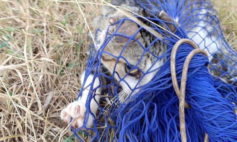 Ação da Ampara Animal em Fernando de Noronha estabelece recorde brasileiro de manejo de gatos com método CED