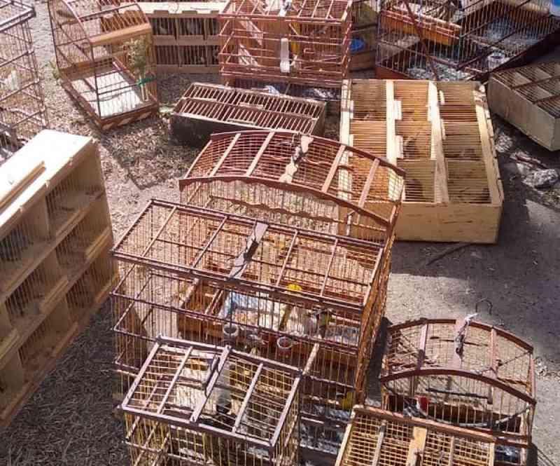 Operação apreende 162 aves silvestres vendidas ilegalmente em feira livre no Recife, PE
