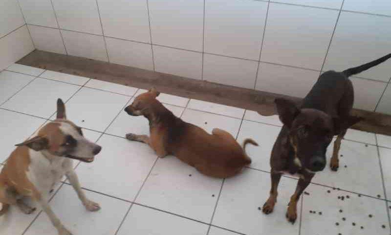 Cães agredidos em Teresina permanecem no Centro de Zoonoses até domingo