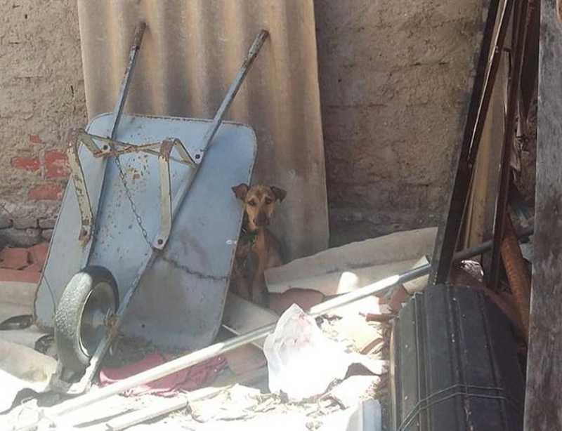 Salvador, cãozinho que sofria maus-tratos, foi resgatado pela Polícia Civil. — Foto: Divulgação/Polícia Civil