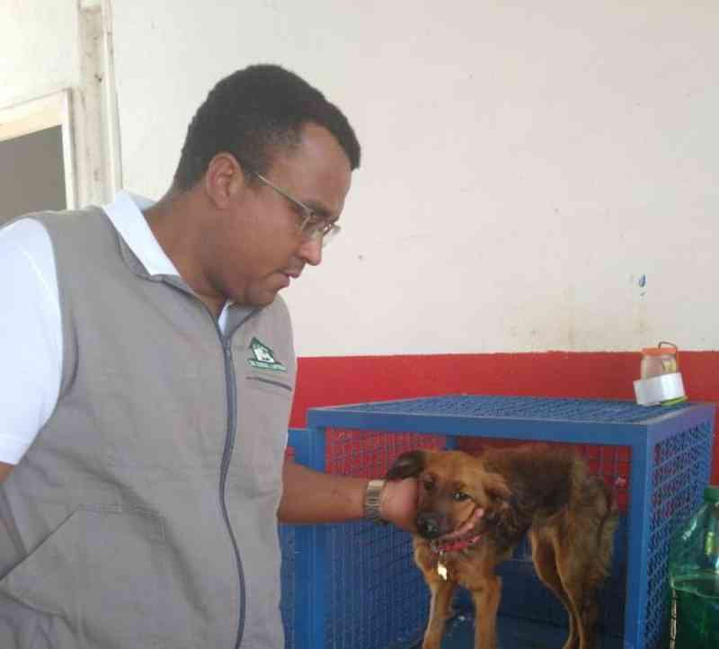 Canil Municipal de Apucarana (PR) recebe quatro denúncias diárias de maus-tratos contra animais; vídeo