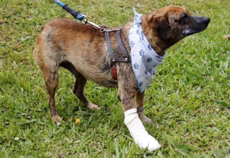 Ambulância resgata três animais por dia no primeiro mês de funcionamento