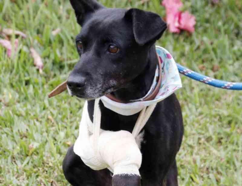 Animais resgatados pela ambulância podem ser adotados neste sábado no Bairro Alto, em Curitiba, PR