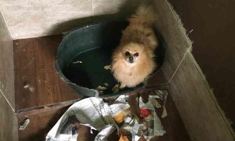 Veterinária é autuada suspeita de maus-tratos a oito cães, em Curitiba, PR