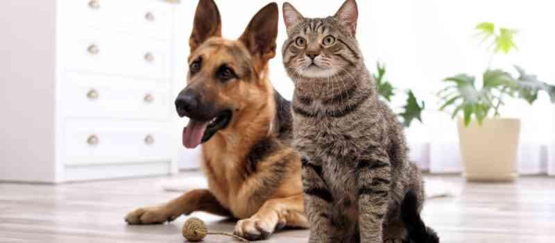 Sema contrata mais 6.872 castrações de cães e gatos em Maringá, PR