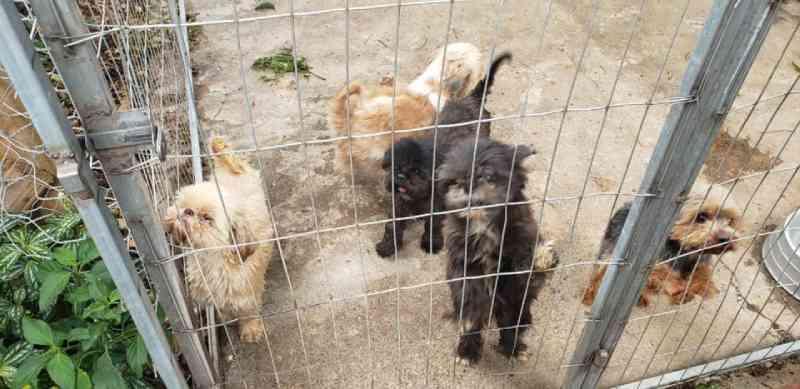 Canil clandestino é fechado e 18 cães em situação de maus-tratos são resgatados em Pinhais, PR