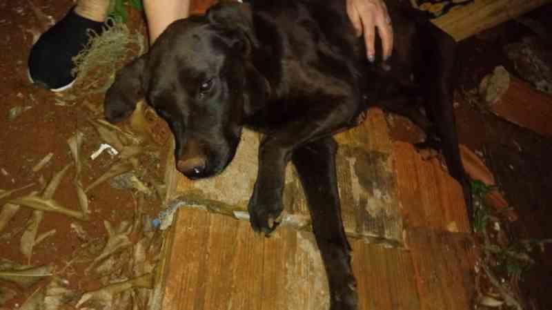 Cachorro que sofria maus-tratos é resgatado no Jardim Europa, em Toledo, PR