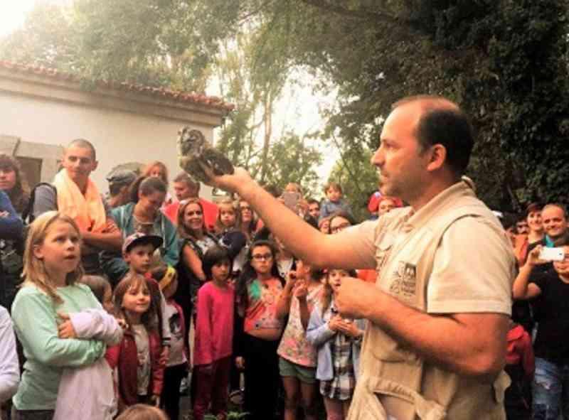 Portugal: corujas-do-mato devolvidas à natureza no Parque do Rio Ul