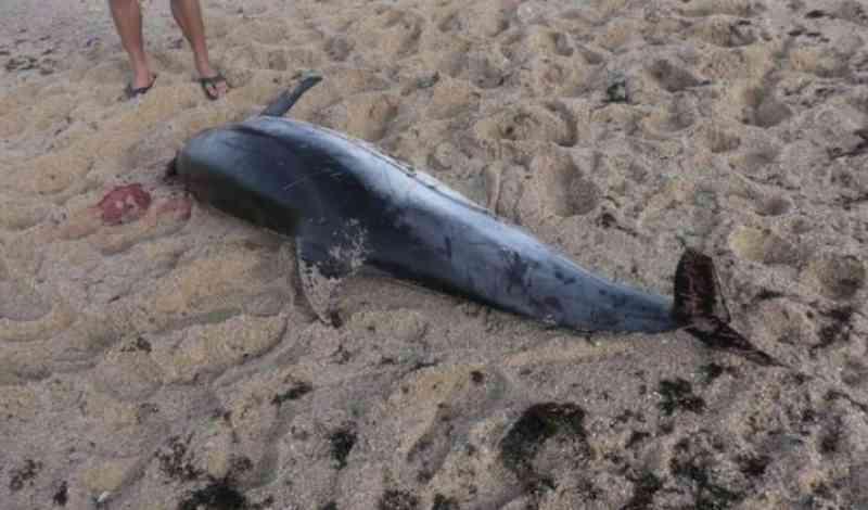 Golfinho morto dá à costa em praia de Sines, Portugal