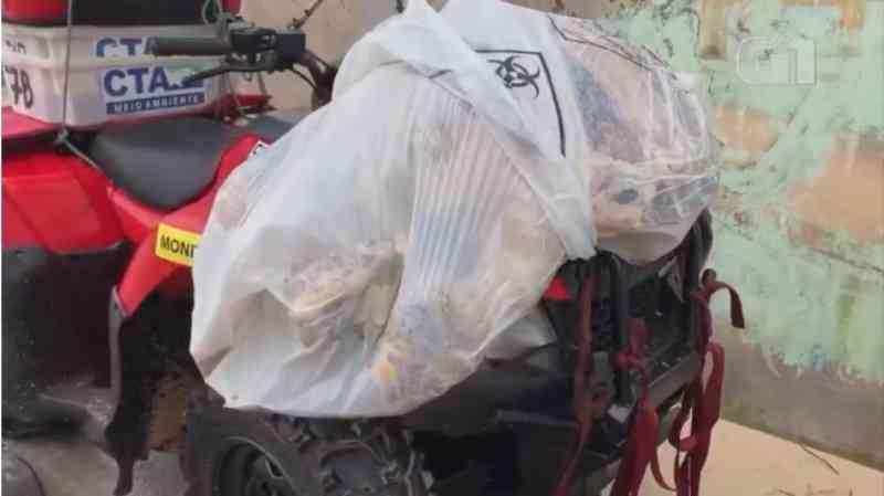 Tartaruga de 50 kg é encontrada morta em praia de Cabo Frio, no RJ