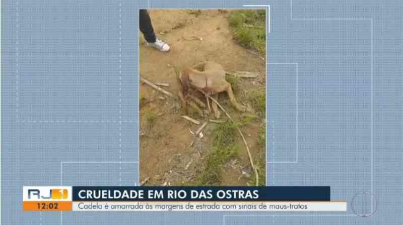 Cadela com sinais de maus-tratos é resgatada após ser amarrada em rodovia no RJ