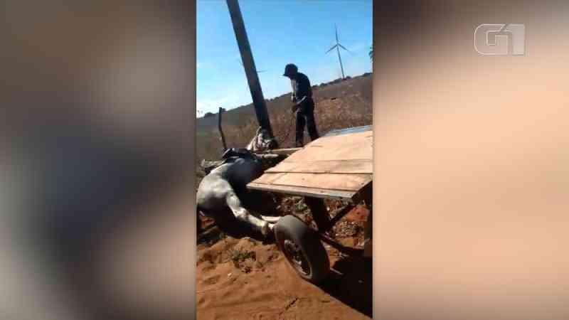 Vídeo mostra homem espancando cavalo no interior do RN; agressor é preso