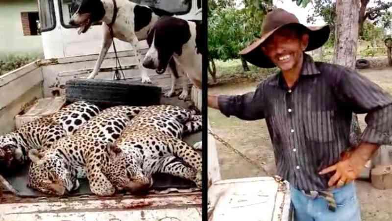 Vídeo: Delegado da PF em RO critica massacre de onças e polícia caça autor