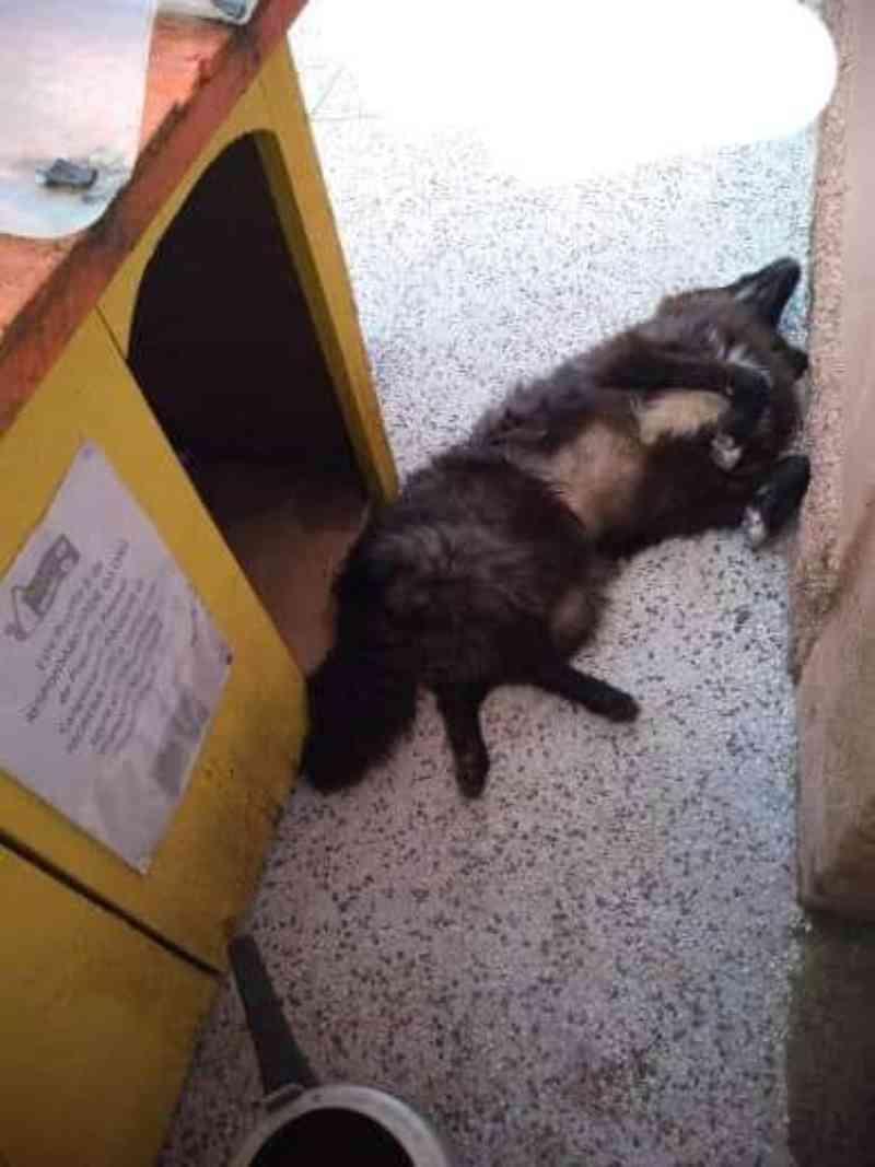 Cadela comunitária é morta a tiros em Canguçu, RS