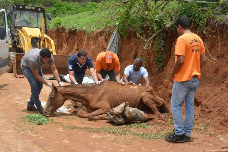 Égua é resgatada três dias após cair de barranco e ficar agonizando no interior do Rio — Foto: Ong Ser da Terra/ Divulgação