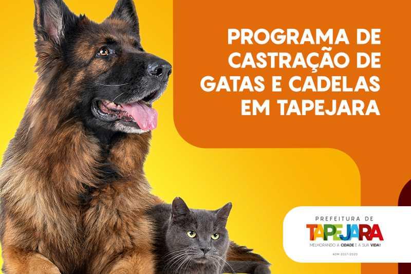 Prefeitura de Tapejara (RS) abre inscrições para castrações de gatas e cadelas