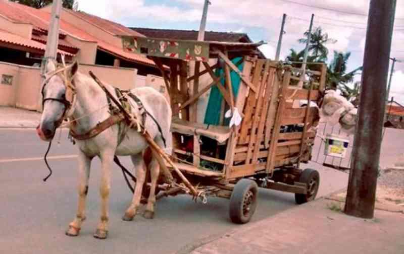 Proibição de veículos de tração animal em Canoinhas (SC) passa a valer em março de 2020