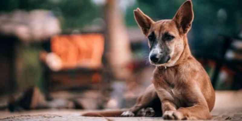 Concórdia (SC) construirá canil com capacidade para quase 100 gatos e 130 cachorros
