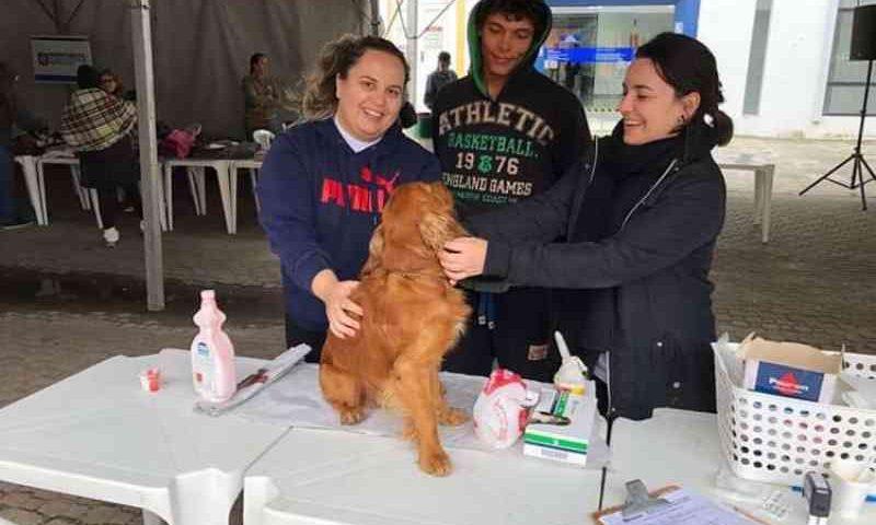 Florianópolis (SC) oferece consulta veterinária de graça para cães de pessoas em situação de rua