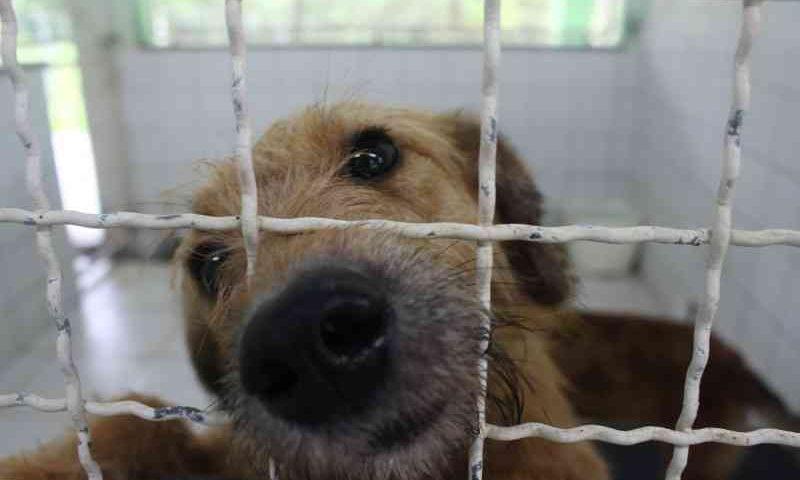 Delegacia Virtual começa oferecer registros de maus-tratos contra animais em SC