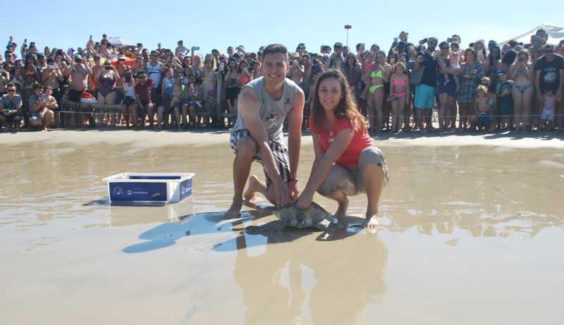 Tartaruga-verde é solta na praia da Barra da Lagoa — Foto: Projeto Tamar/Divulgação