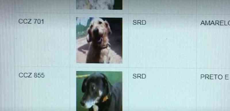 Site com perfil de mais de 100 cães em Araras (SP) incentiva a adoção