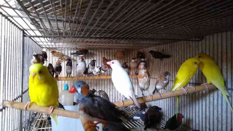 Maior apreensão do ano resgata 318 aves em situação de maus-tratos em Caçapava, SP
