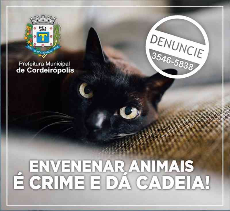 Onda de envenenamentos de animais leva Prefeitura de Cordeirópolis (SP) a iniciar campanha de conscientização