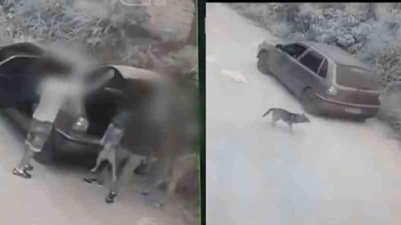 Casal é preso após abandonar cachorro de estimação na estrada