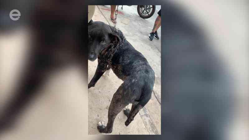 Garra resgata cachorro vítima de maus-tratos no bairro Jequitibás, em Limeira, SP